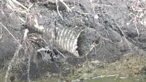 Failed septic tank pipe