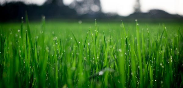 Keeping Your Lawn Healthy | Croft Drainage | Lincolnshire